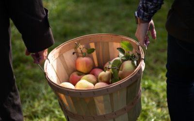 Six must-see places at Apple Hill this fall